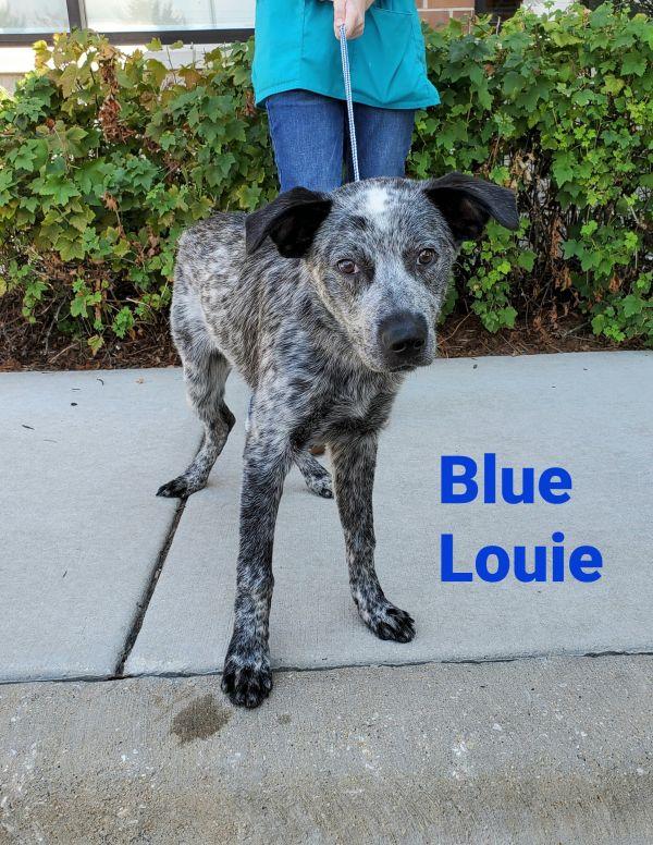 Blue Louie