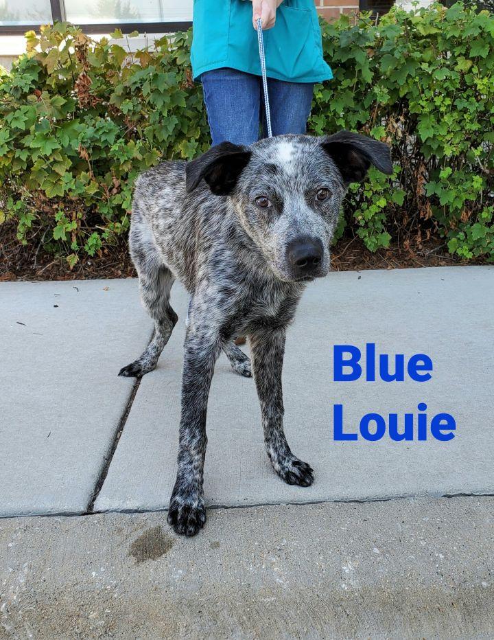 Blue Louie  1