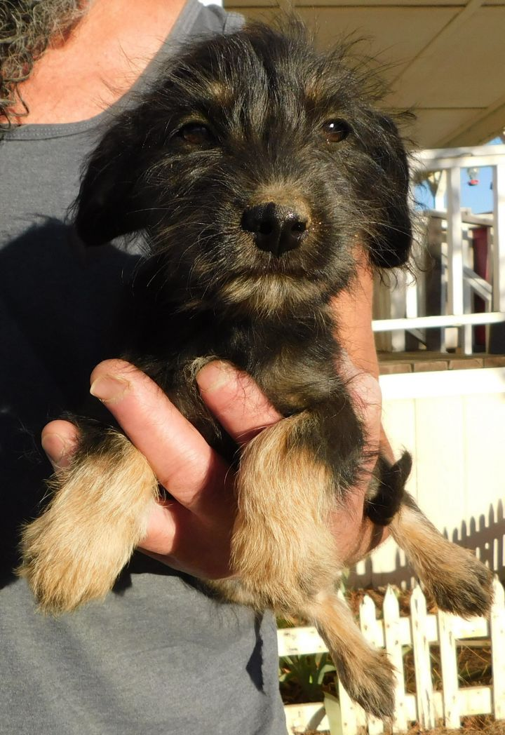 CJ, an adopted Terrier Mix in Corona, CA_image-1