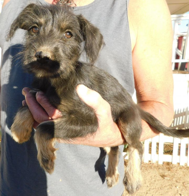 CJ, an adopted Terrier Mix in Corona, CA_image-2