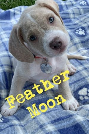 Meet male puppy Feather Moon born on July 24th Feather is one of 8 puppies born to Red Collar dog