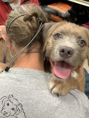 Meet male puppy Silver Moon born on July 24th Silver is one of 8 puppies born to Red Collar dog