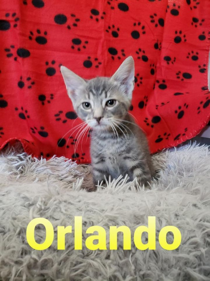 Orlando 2