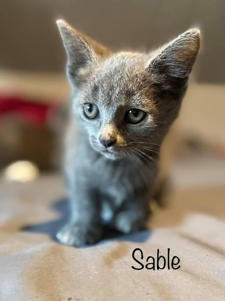 Sable 1