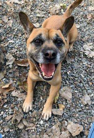 Hogan French Bulldog Dog