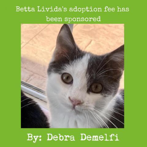 Betta Livida 1