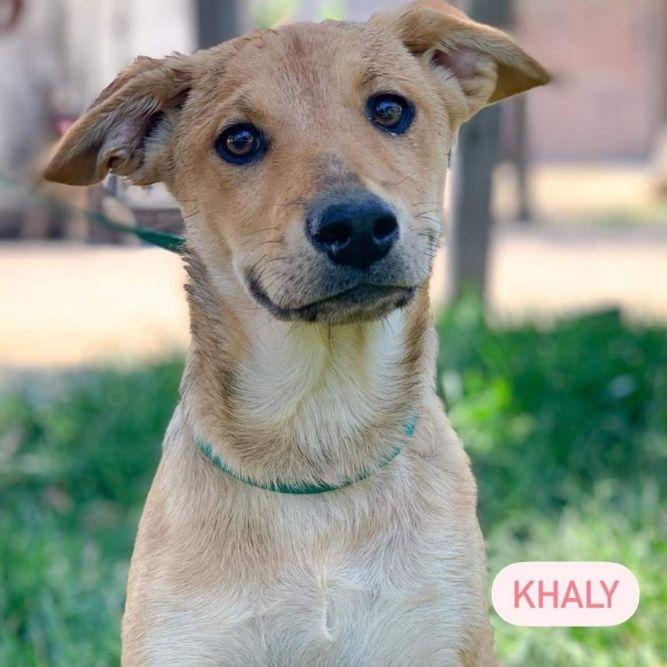 Khaly