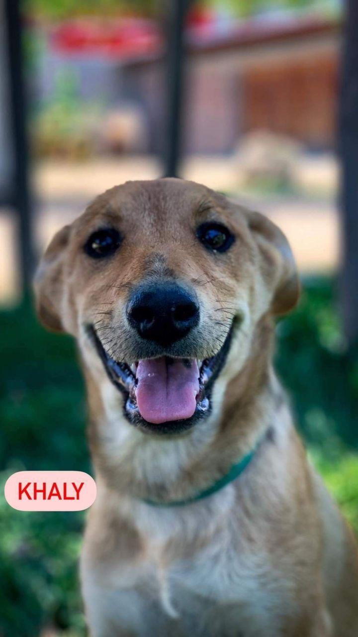 Khaly 2