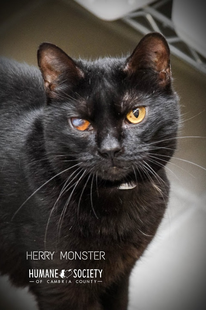 Herry Monster 1