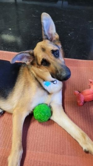 Hello I am Cody a Distemper Survivor At the beginning of July I almost died from the Distemper V