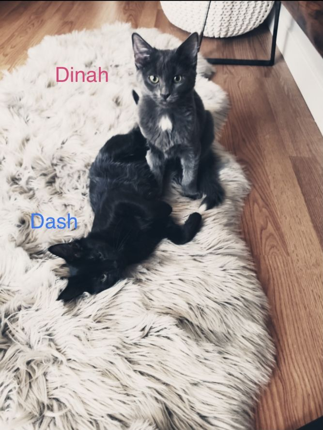 Dinah and Dash