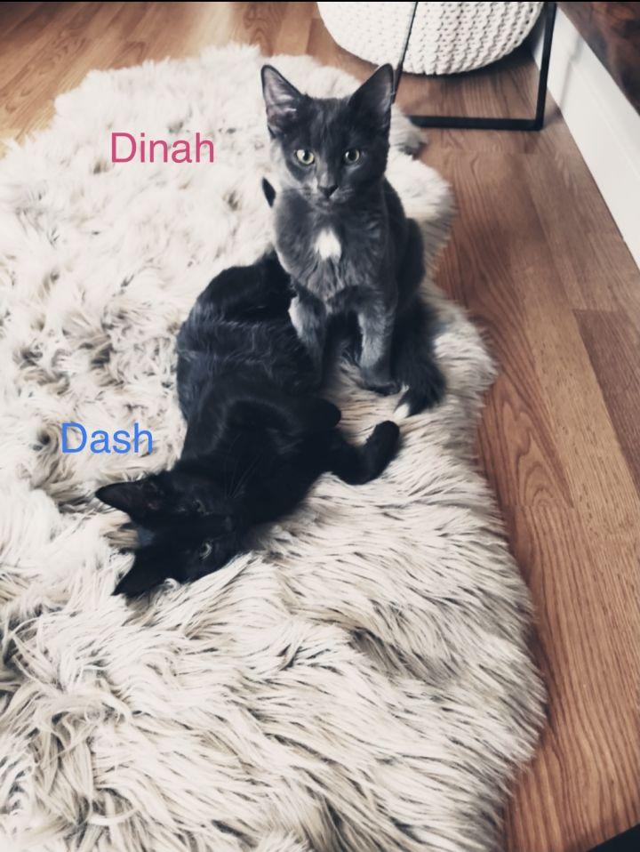 Dinah and Dash  1
