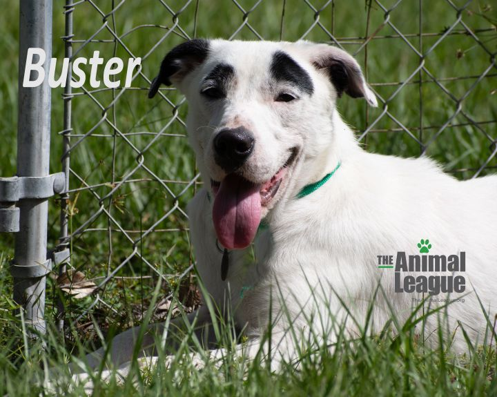 Buster 4