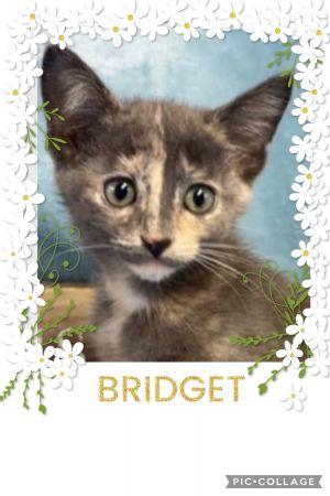 Bridget A-3890