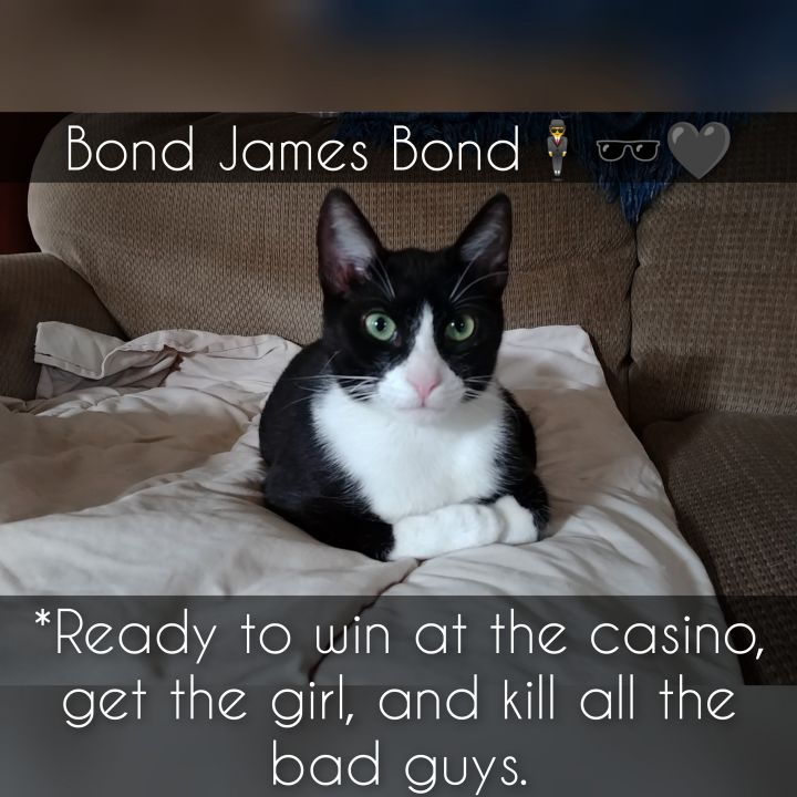 Coral and Bond James Bond (A-2838 & A-2840) 6