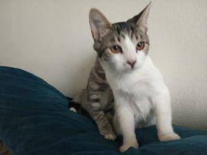 Sammy Tabby Cat