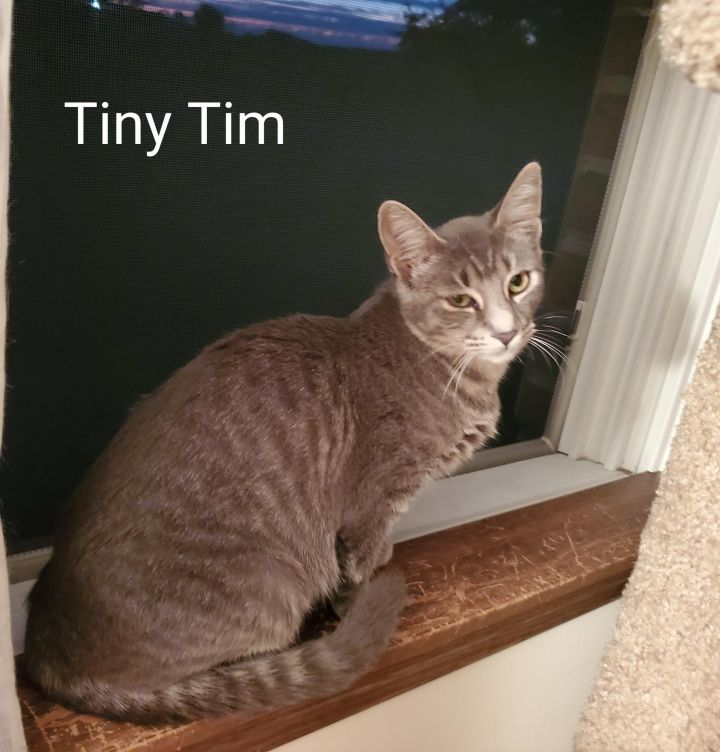 Snowy and Tiny Tim 3