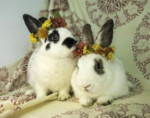BAMBI Bunny Rabbit Rabbit