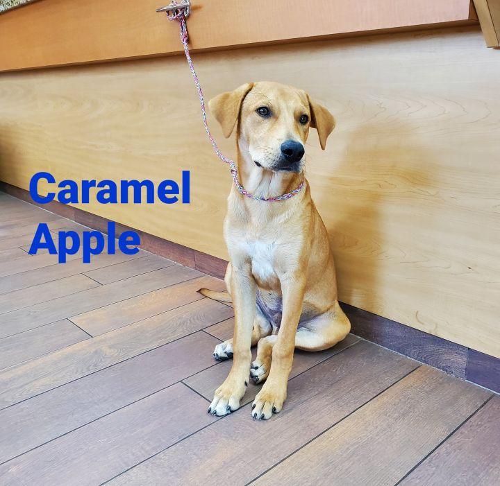 Caramel Apple  2