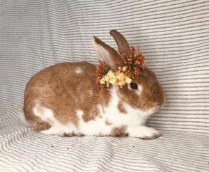 PJ Bunny Rabbit Rabbit