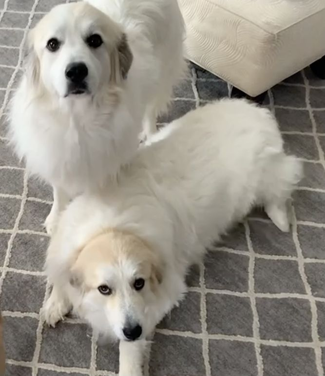 Lorelei & Skylar