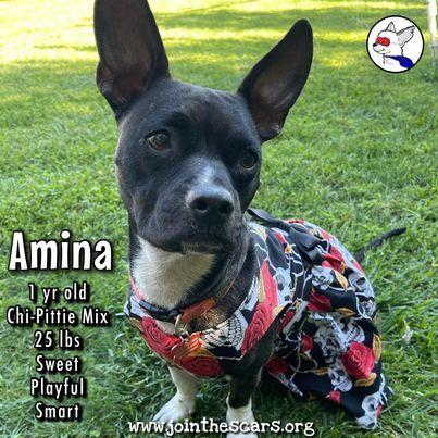 Amina 1