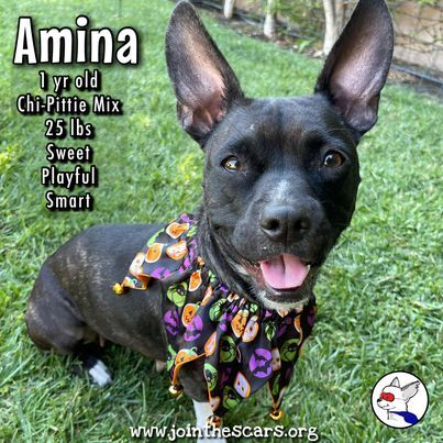 Amina 5