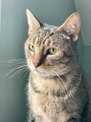 If youre looking for a lovely-natured cat then youve found him JJ is an affectionate cat who is a