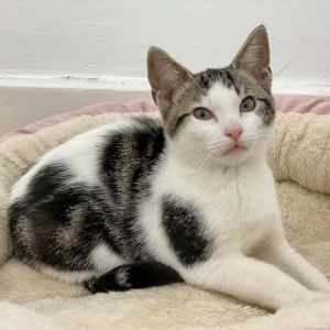 Biscotti is ready for his forever home birth date  62121 This high-spirited boy was raised in
