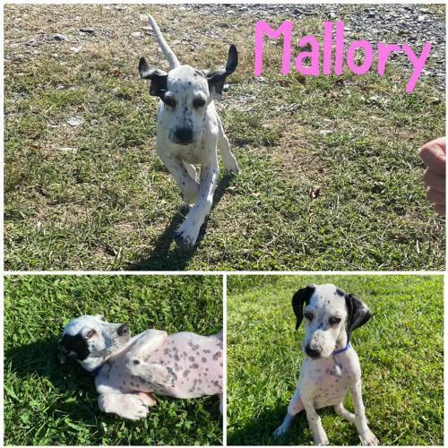 Mallory 1