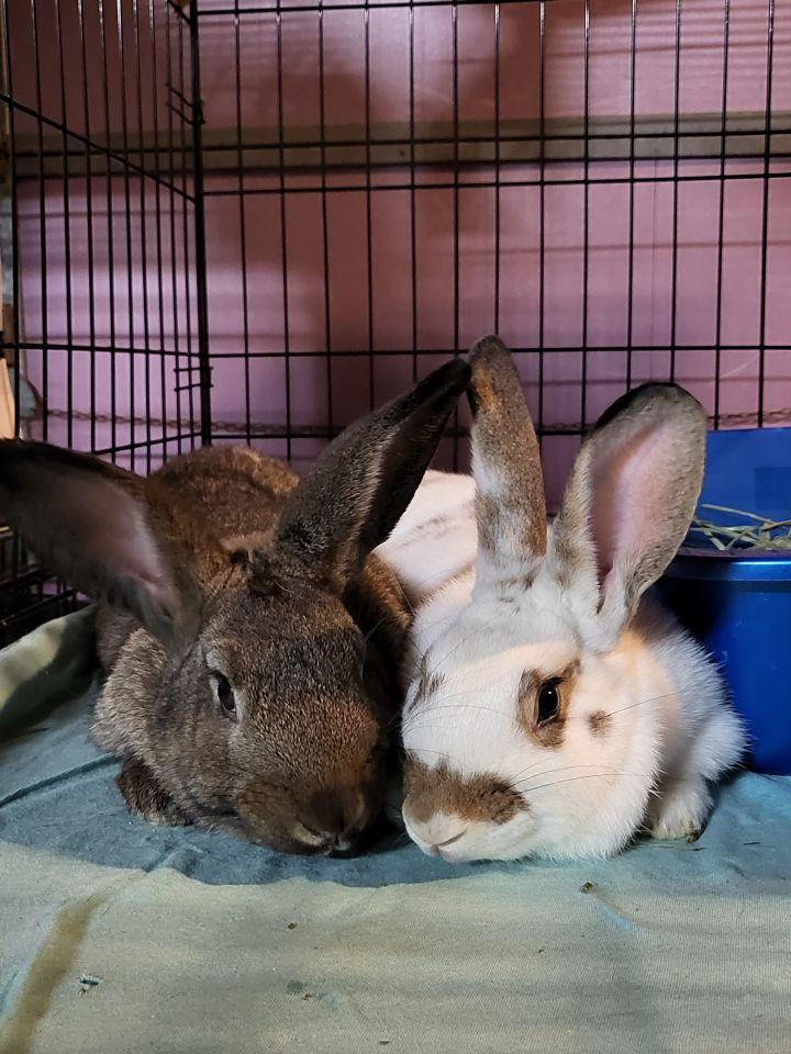 Missy & Rocky 2