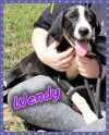 Wendy Darling Puppy - NEW PICTURES!