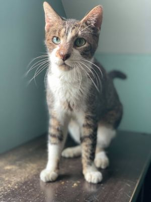 Picachu is a adorable cat whos fallen on hard times but his gentle nurturing soul still shines thr