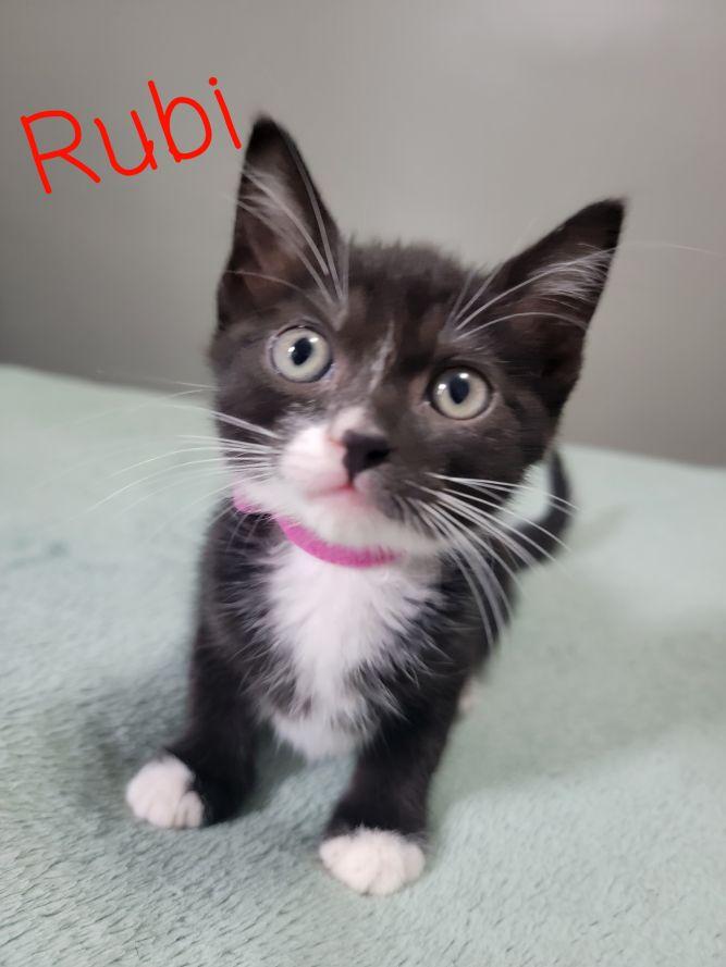 Rubi A-4173