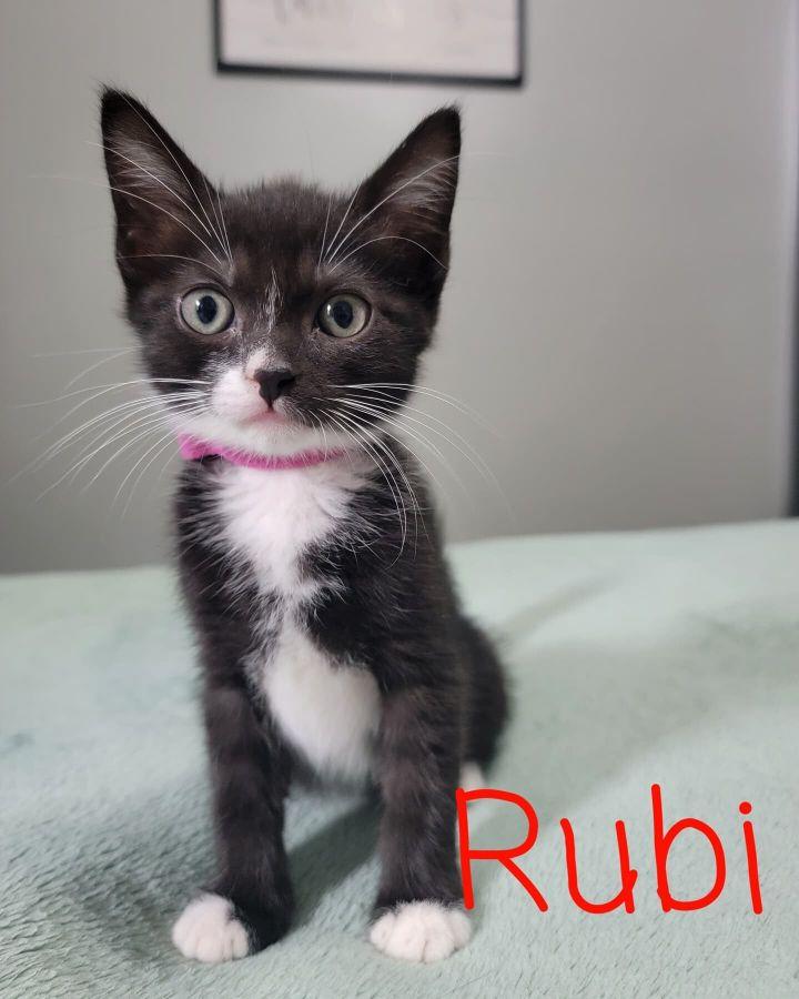Rubi A-4173 2