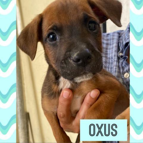 Oxus 1