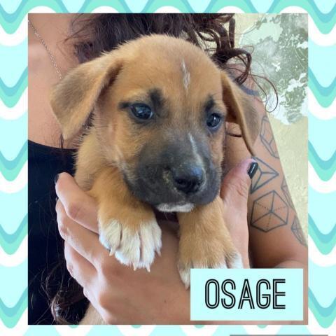 Osage 1