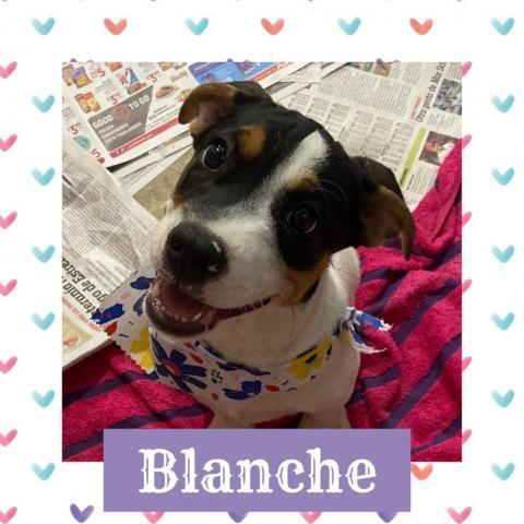 Blanche 1