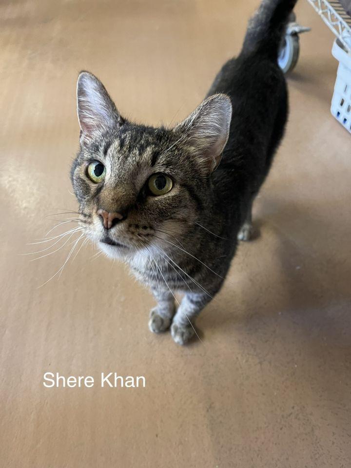 Shere Khan 1