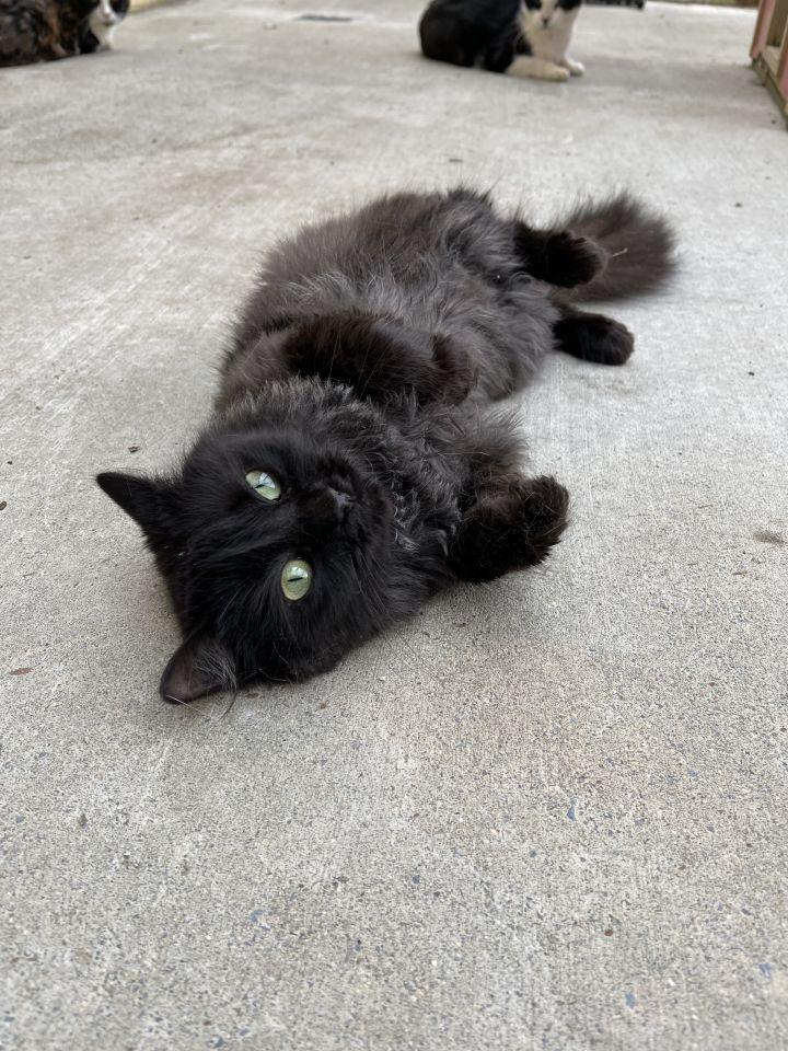 Little Cat 3
