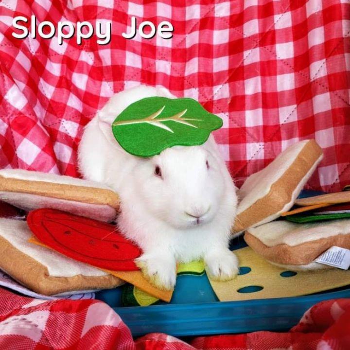 Sloppy Joe 1