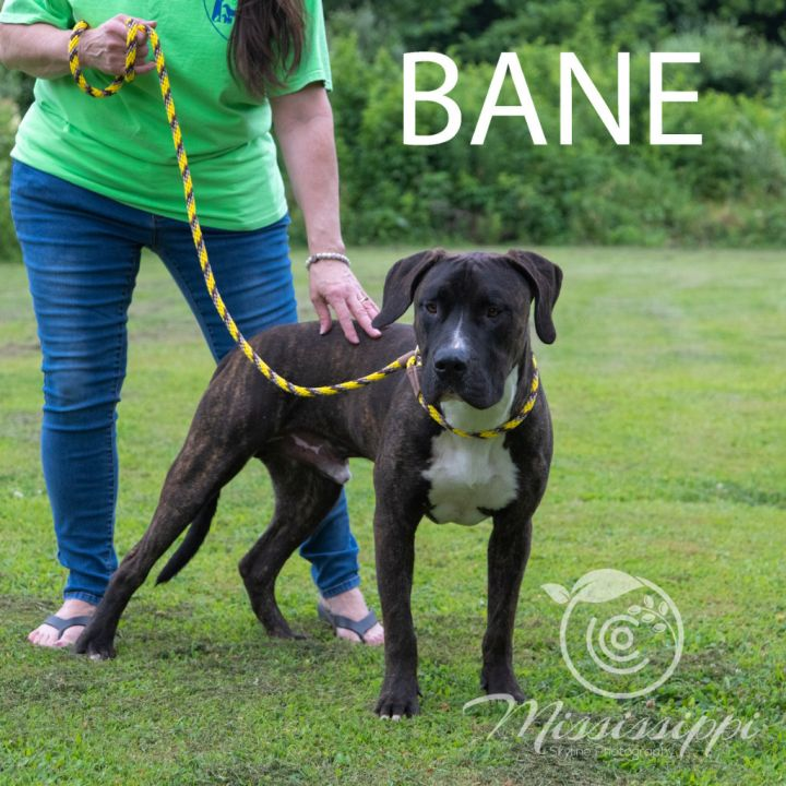 Bane 3