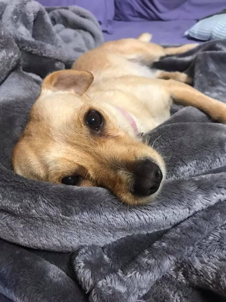 Trixie 4