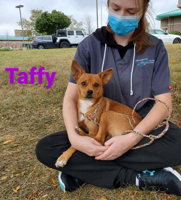 Taffy 2
