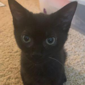 Petey (Legion kittens)
