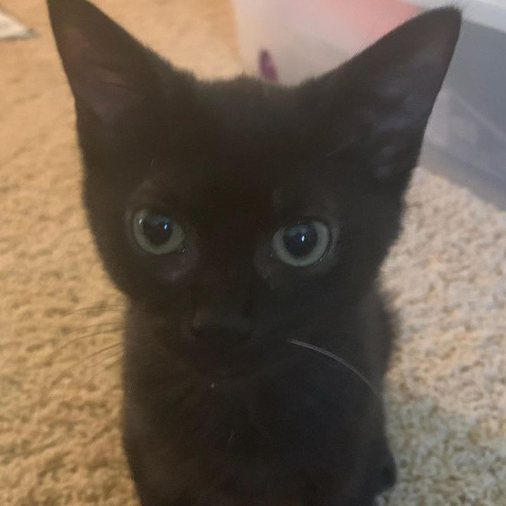 Petey (Legion kittens) 1
