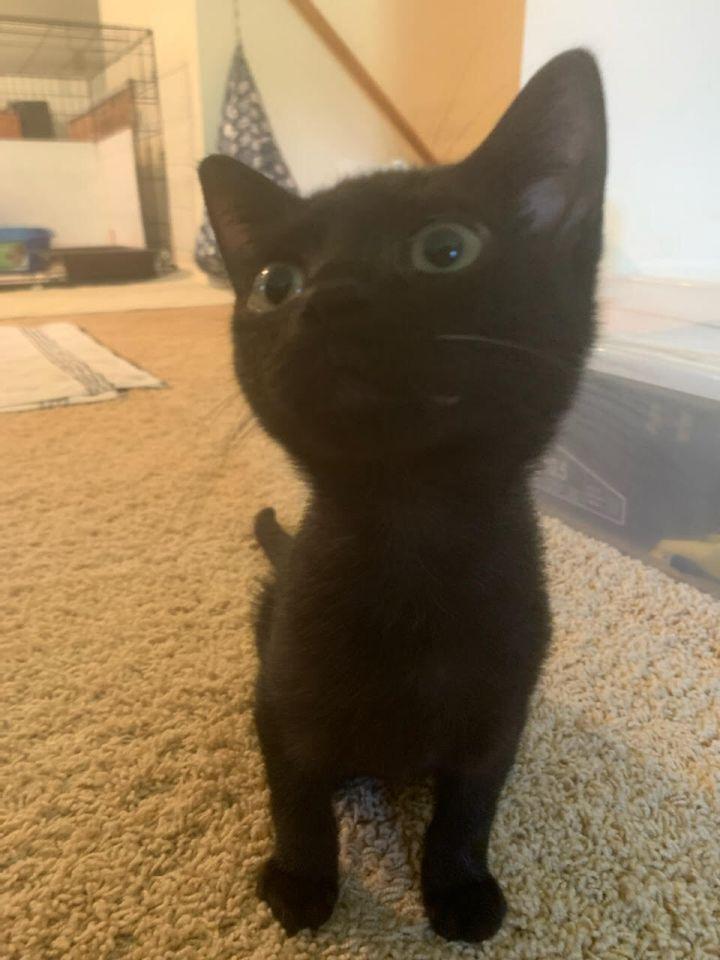 Petey (Legion kittens) 2