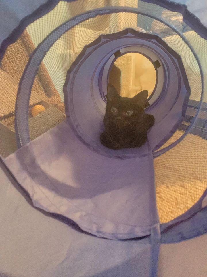 Petey (Legion kittens) 5