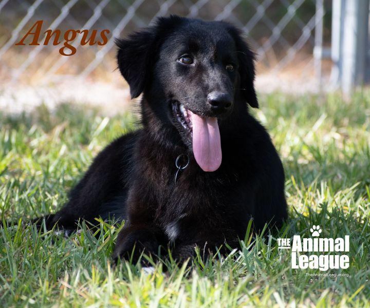 Angus 4