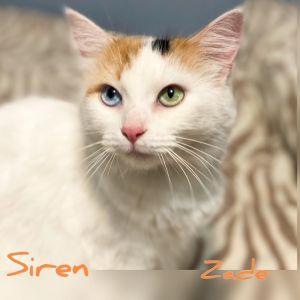Siren A-3871